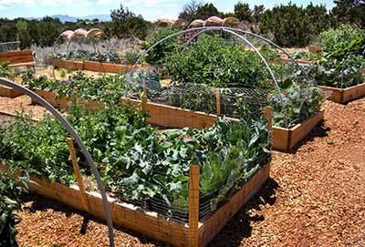 community garden3